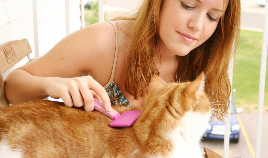 Вычесывание кота для борьбы с блохами