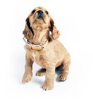 стерилизация собак цена