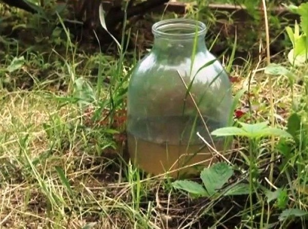 Керосин, как средство против муравьев на участке