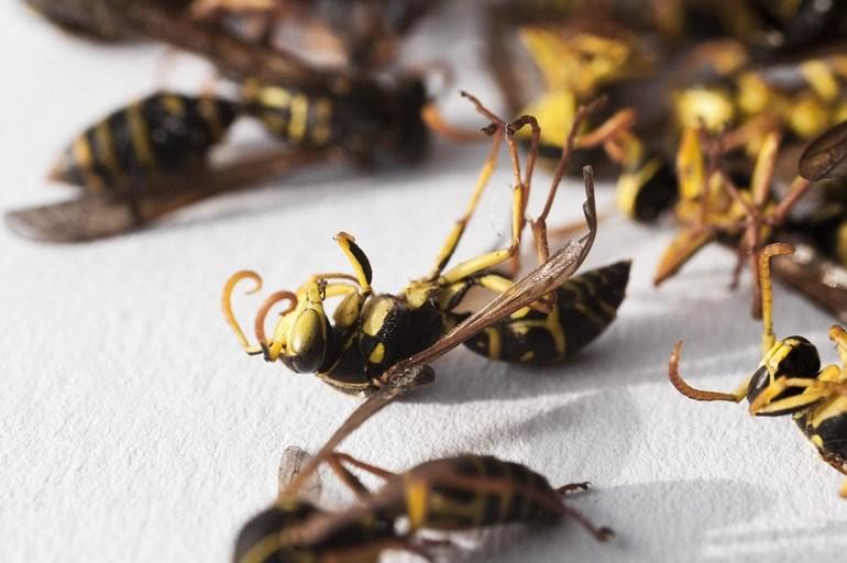 Убивать насекомых
