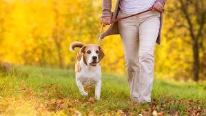 места для выгула собак