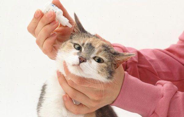 Качественное лекарство ускорит выздоровление кошки