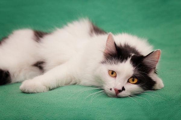 Укушенная кошка чаще всего ведет себя спокойно