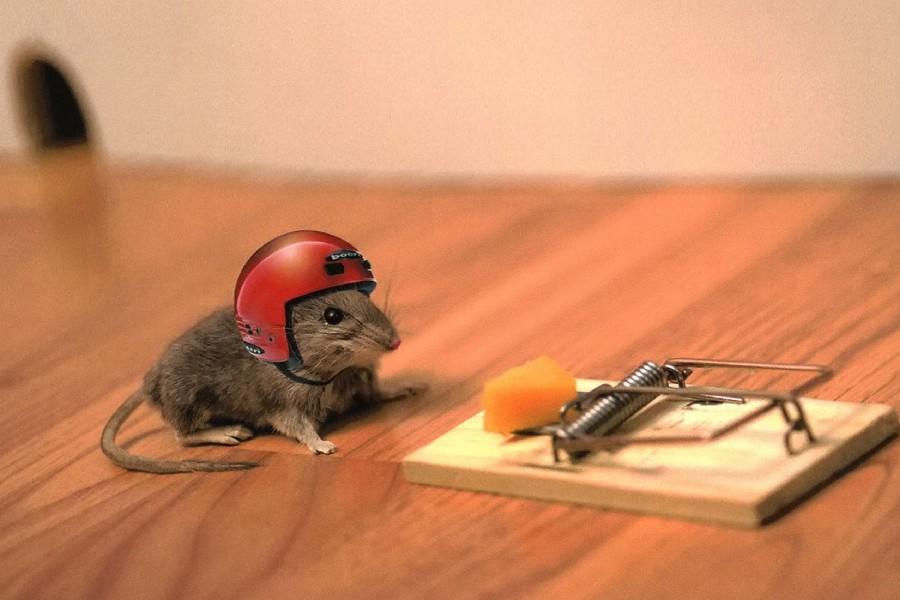 Мышь готова к испытанию мышеловки