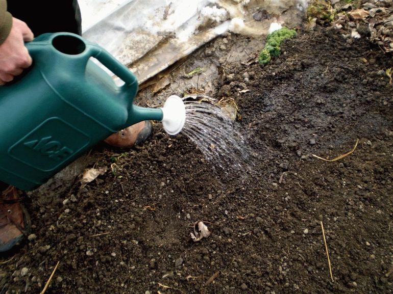 Обработка почвы антибактериальными средствами.