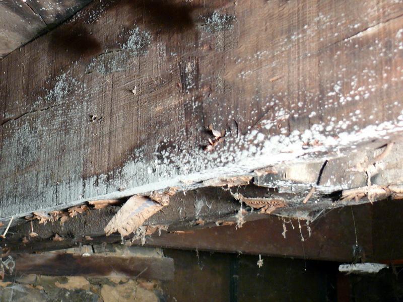 Сырость и грибок в подвале