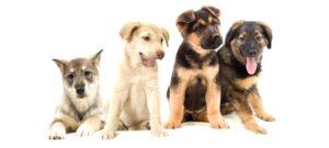 породы собачек