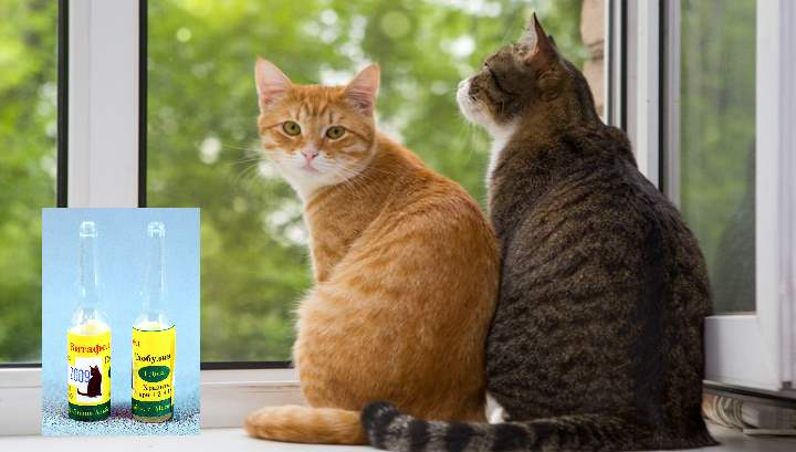 Панлейкопения, или кошачья чума, или инфекционный гастроэнтерит,