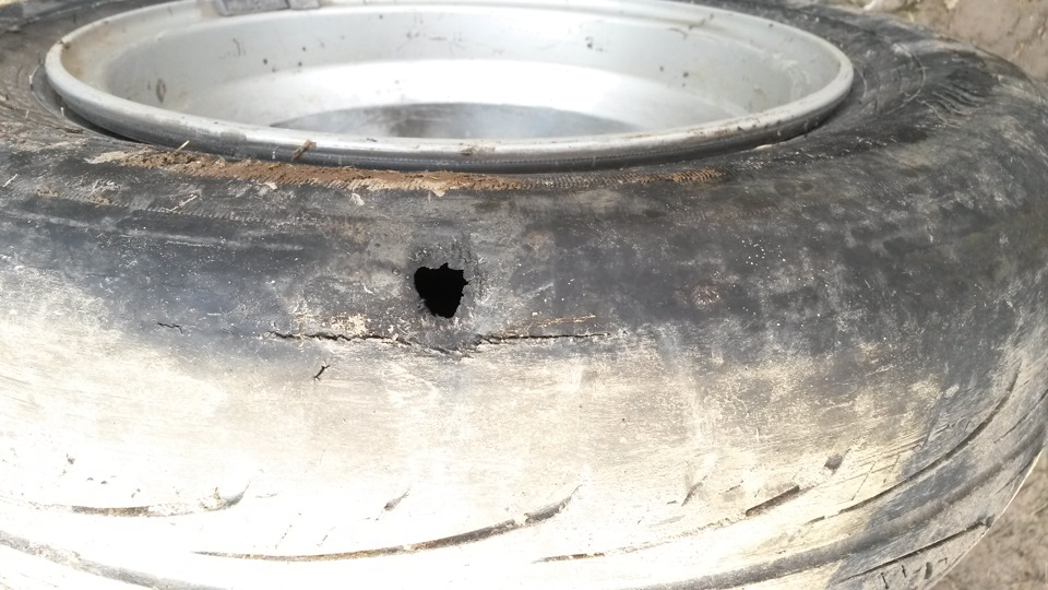 Мыши или крысы прогрызли дырку в летнем колесе