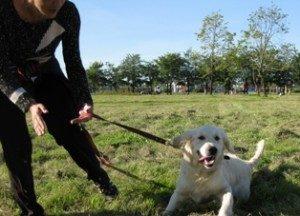первичные приказы для тренировки собак