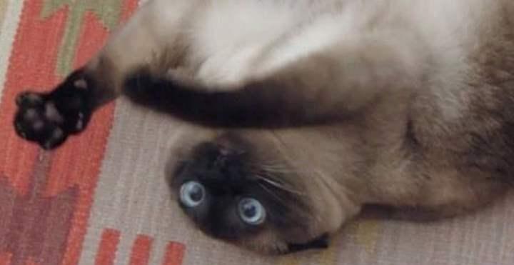 Опьяненный кот