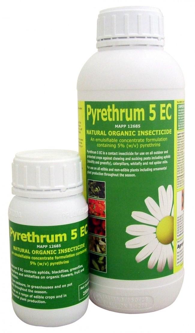 Эффективным средством в борьбе с тараканами является порошок пиретрум