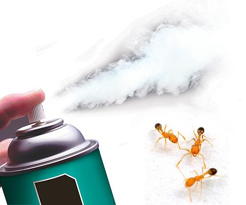 Использование распылителя против муравьев