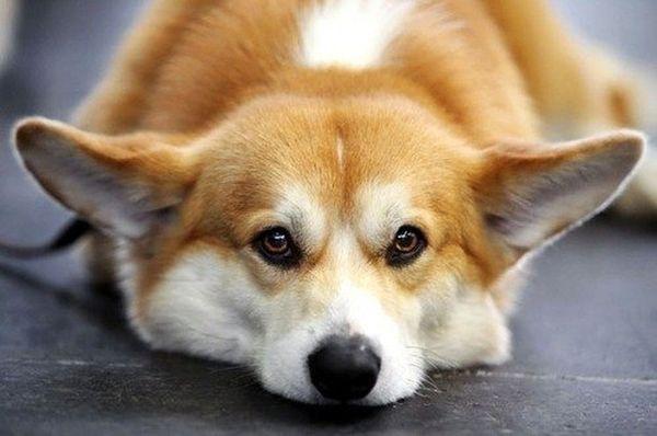 Не забывайте периодически показывать своего любимца ветеринару