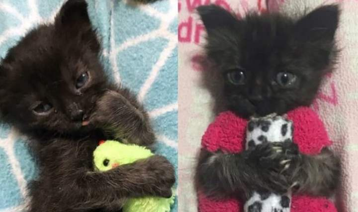 Котики с игрушками