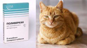 Поливеркан для кошек применяют в лечебных и профилактических целях