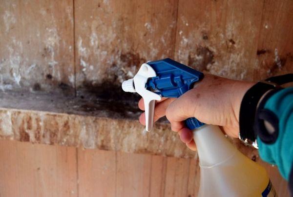 Обработка курятника поможет побороть клеща