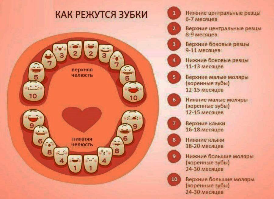 Со скольки месяцев режутся первые зубки у деток?