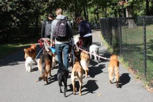 запрещенные места выгула собак