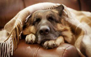 болезни сокращают жизнь собаке