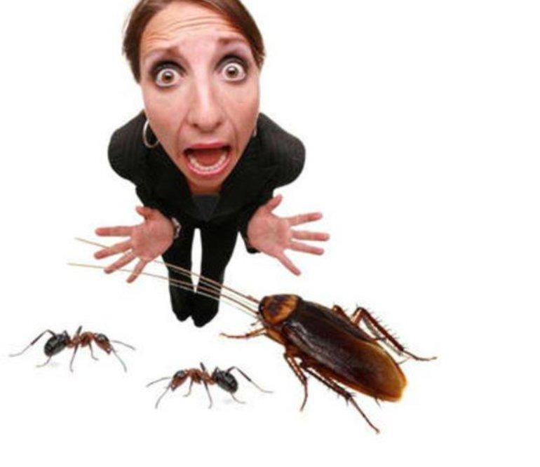 Если женщина боится таракана,