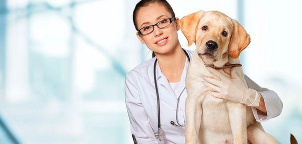 Вылечить собаку можно за несколько месяцев