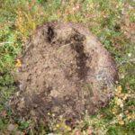 Колония муравьев в саду