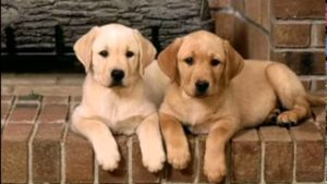 породистые собаки