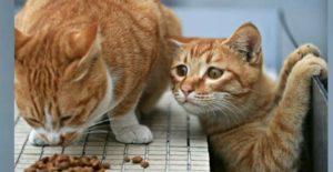Кот хочет корм