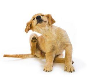 аллергия у собак на перхоть