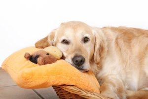 вторая неделя беременности собаки