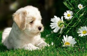 клички на букву к для маленьких собак